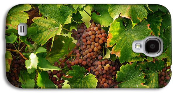 Vines With Ripe Grapes Galaxy S4 Case by Jenny Rainbow