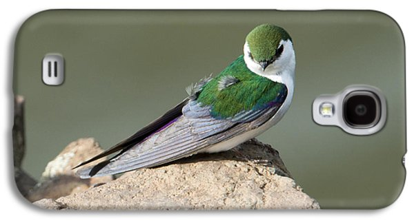 Swallow Galaxy S4 Cases - Violet-Green Swallow Galaxy S4 Case by Mike Dawson