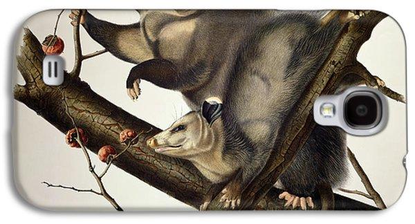 Virginian Opossum Galaxy S4 Case by John James Audubon