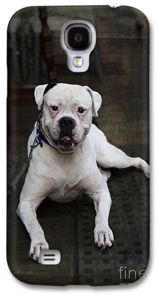 White Dog - Malaga Spain Galaxy S4 Case by Mary Machare