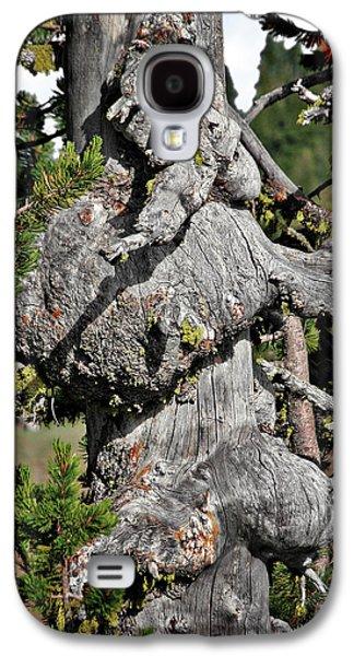 Survivor Art Galaxy S4 Cases - Whitebark Pine Tree - Iconic Endangered Keystone Species Galaxy S4 Case by Christine Till