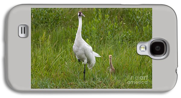 Scott Nelson Galaxy S4 Cases - Whooping Crane and Chick Galaxy S4 Case by Scott Nelson