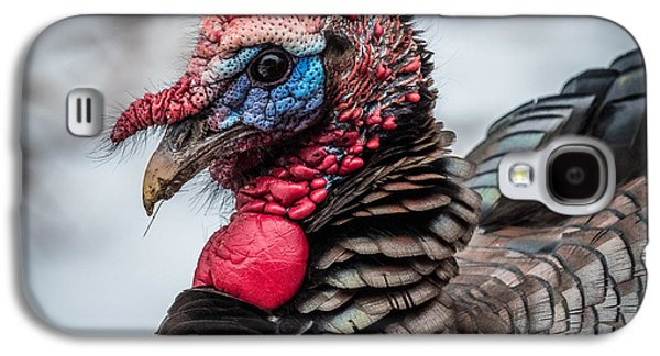 Wild Turkey Galaxy S4 Cases - Wild Turkey In color Galaxy S4 Case by Paul Freidlund
