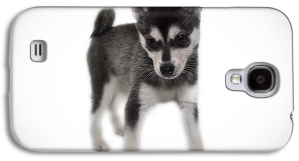 Puppies Galaxy S4 Cases - Willow Galaxy S4 Case by Roddy Atkinson