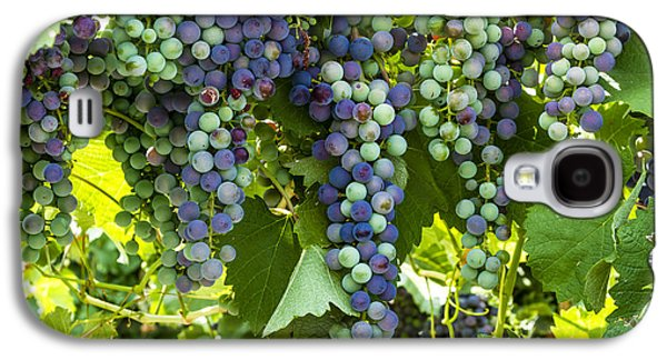 Wine Grape Colors Galaxy S4 Case by Teri Virbickis