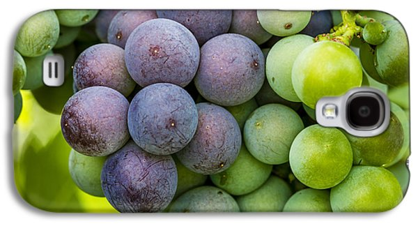 Wine Grapes Close Up Galaxy S4 Case by Teri Virbickis