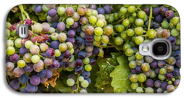 Wine Grapes On The Vine Galaxy S4 Case by Teri Virbickis