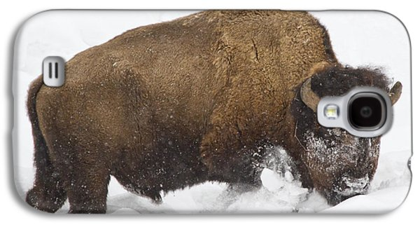 Bison Pyrography Galaxy S4 Cases - Winter Buffalo Galaxy S4 Case by Cat Hesselbacher