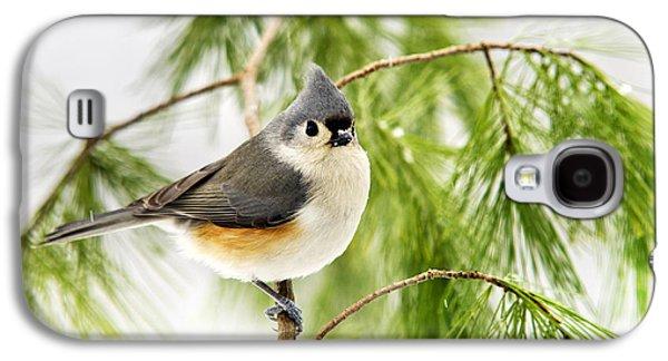 Winter Pine Bird Galaxy S4 Case by Christina Rollo