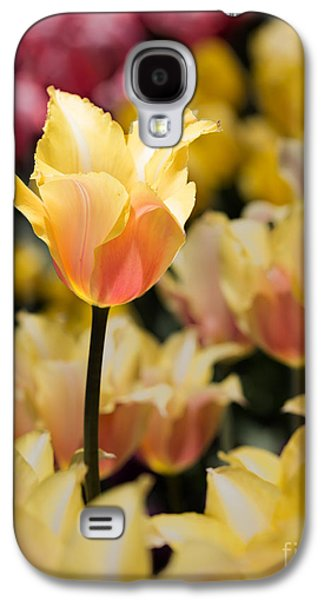 Sun Galaxy S4 Cases - Yellow and Pink Galaxy S4 Case by Tom Gari Gallery-Three-Photography
