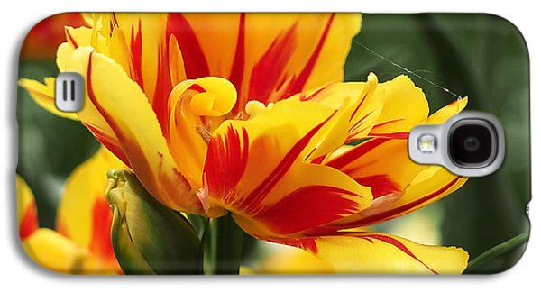 Green Galaxy S4 Cases - Yellow and Red Triumph Tulips Galaxy S4 Case by Rona Black