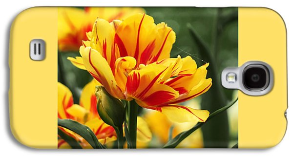 Botanical Galaxy S4 Cases - Yellow and Red Triumph Tulips Galaxy S4 Case by Rona Black