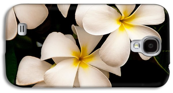 The Photographs Galaxy S4 Cases - Yellow and White Plumeria Galaxy S4 Case by Brian Harig