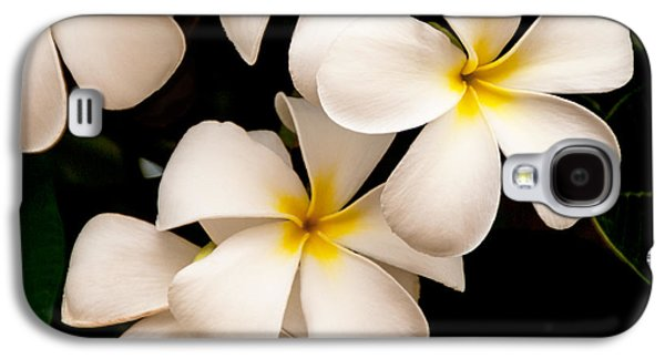 Plants Galaxy S4 Cases - Yellow and White Plumeria Galaxy S4 Case by Brian Harig