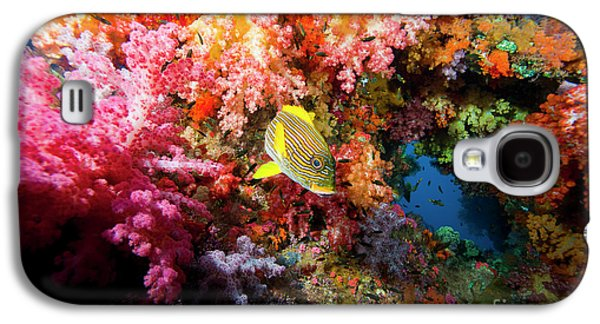 Undersea Photography Galaxy S4 Cases - Yellow Banded Sweetlip Fish And Coral Galaxy S4 Case by Beverly Factor