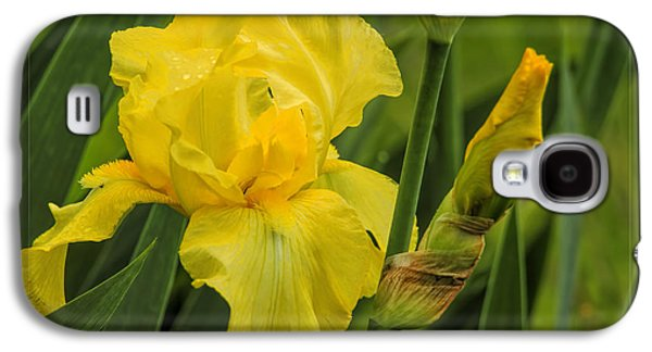 Business Galaxy S4 Cases - Yellow Bearded Iris Galaxy S4 Case by Geraldine Scull