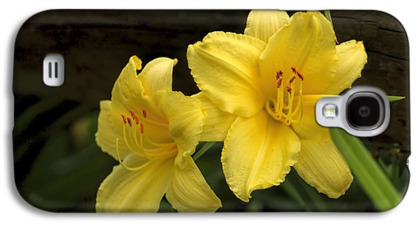 Botanical Galaxy S4 Cases - Yellow Day Lilies Galaxy S4 Case by Geraldine Scull