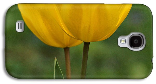 Indiana Flowers Galaxy S4 Cases - Yellow Tulips Galaxy S4 Case by Sandy Keeton