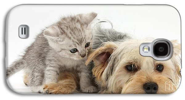 Domesticated Animals Galaxy S4 Cases - Yorkshire Terrier And Tabby Kitten Galaxy S4 Case by Mark Taylor