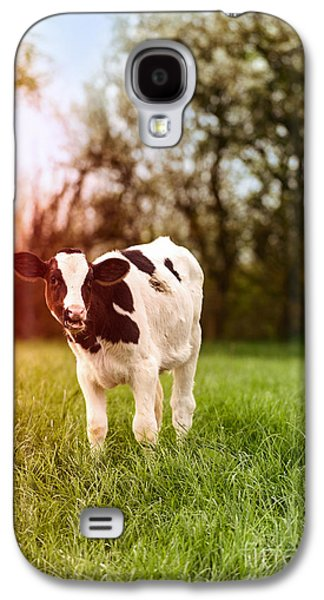 Farming Galaxy S4 Cases - Young Calf Galaxy S4 Case by Amanda And Christopher Elwell