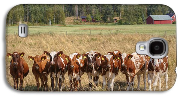 Red Barns Galaxy S4 Cases - Young calves on pasture Galaxy S4 Case by Veikko Suikkanen