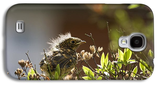 Spring Scenes Galaxy S4 Cases - Young robin Galaxy S4 Case by Jane Rix