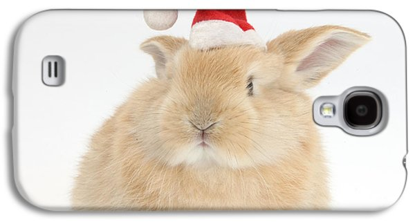 House Pet Galaxy S4 Cases - Young Sandy Rabbit Wearing A Christmas Galaxy S4 Case by Mark Taylor