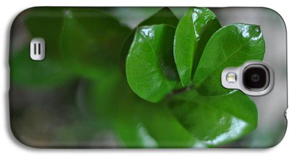 Studio Photographs Galaxy S4 Cases - Zamia - green twig Galaxy S4 Case by Marzena Jandura