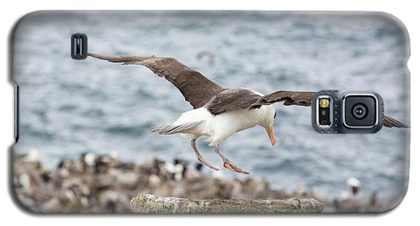 A Black Browed Albatross Galaxy S5 Case by Ashley Cooper