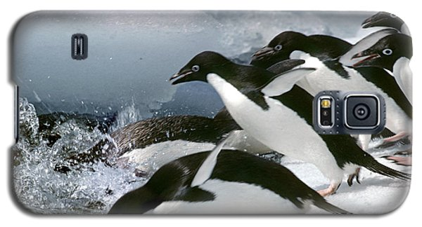 Adelie Penguins Galaxy S5 Case by Art Wolfe