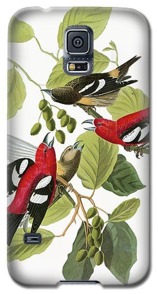 Audubon Crossbill Galaxy S5 Case by Granger