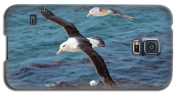 Black-browed Albatross (thalassarche Galaxy S5 Case by Martin Zwick