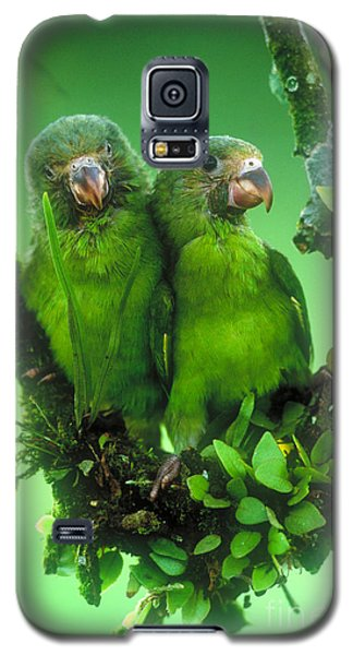 Cobalt-winged Parakeets Galaxy S5 Case by Art Wolfe
