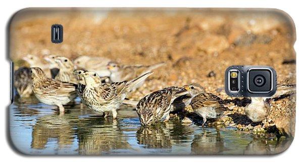 Corn Bunting Emberiza Calandra Galaxy S5 Case by Photostock-israel