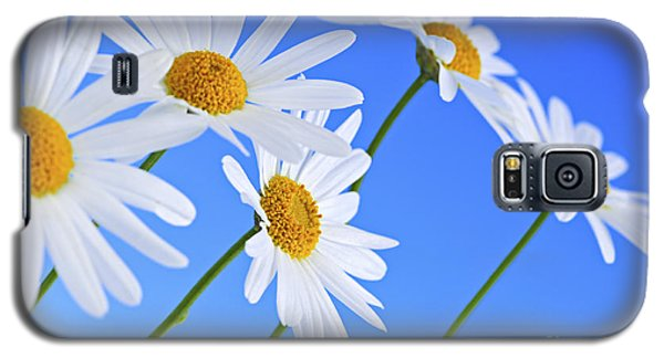 Floral Galaxy S5 Cases - Daisy flowers on blue background Galaxy S5 Case by Elena Elisseeva