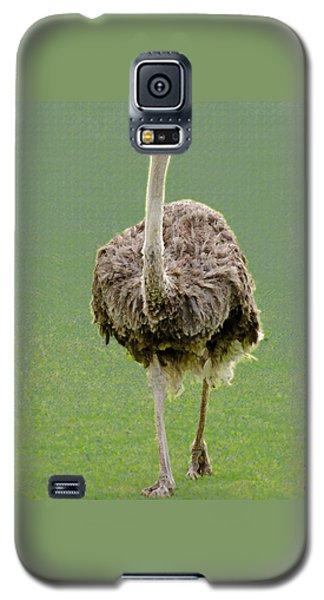 Emu Galaxy S5 Case by Ellen Henneke