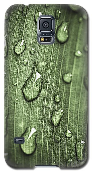 Plant Galaxy S5 Cases - Green leaf abstract with raindrops Galaxy S5 Case by Elena Elisseeva