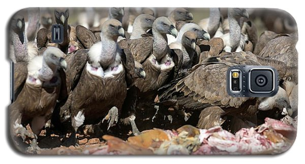 Griffon Vultures Feeding Galaxy S5 Case by Nicolas Reusens