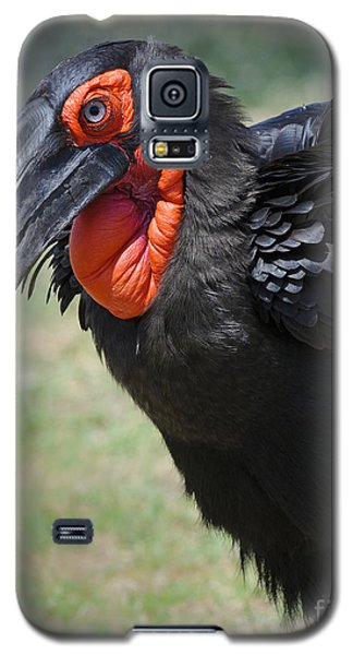 Ground Hornbill Galaxy S5 Case by John Shaw