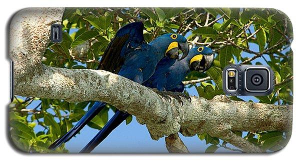 Hyacinth Macaws, Brazil Galaxy S5 Case by Gregory G. Dimijian, M.D.