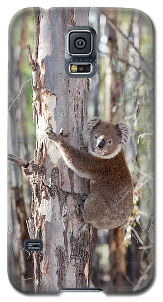 Koala Bear Galaxy S5 Case by Ashley Cooper