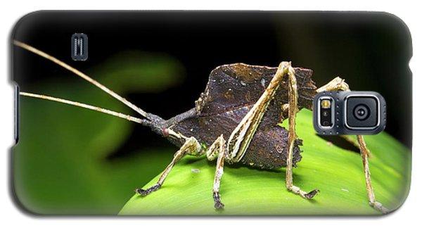 Leaf Mimic Bush-cricket Galaxy S5 Case by Dr Morley Read