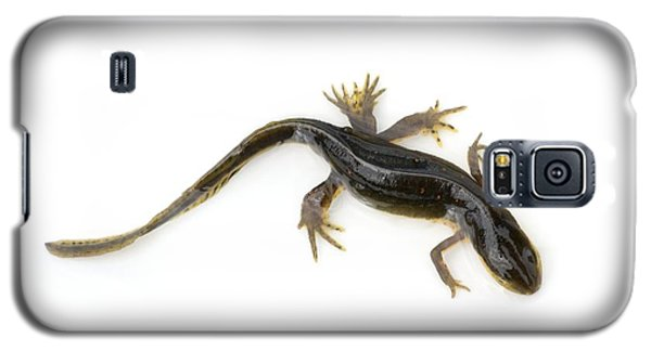 Mutated Eastern Newt Galaxy S5 Case by Lawrence Lawry
