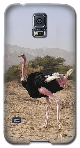 Ostrich In A Nature Reserve Galaxy S5 Case by PhotoStock-Israel