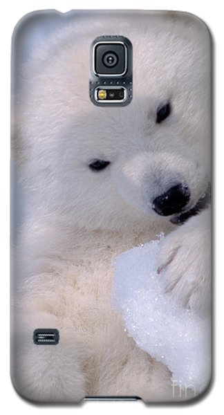 Polar Bear Cub Galaxy S5 Case by Mark Newman