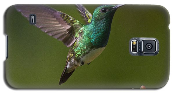 Snowy-bellied Hummingbird Galaxy S5 Case by Heiko Koehrer-Wagner