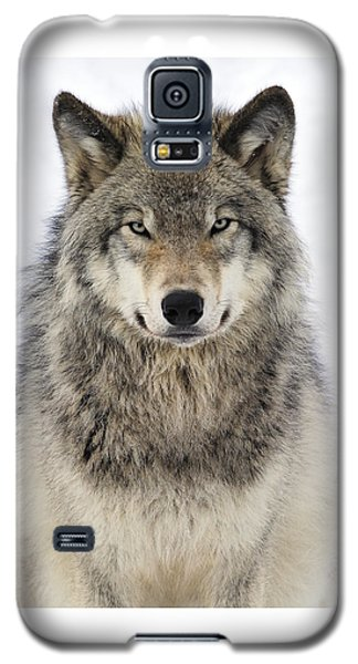 Timber Wolf Portrait Galaxy S5 Case by Tony Beck