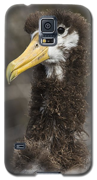 Waved Albatross Molting Juvenile Galaxy S5 Case by Pete Oxford