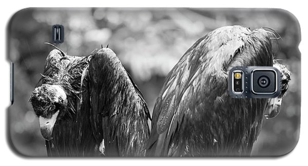 White-backed Vultures In The Rain Galaxy S5 Case by Pan Xunbin