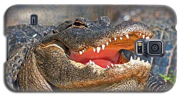 American Alligator Galaxy S5 Case by Millard H. Sharp